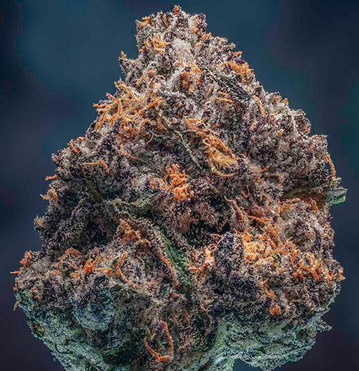 high quality dried cannabis flower