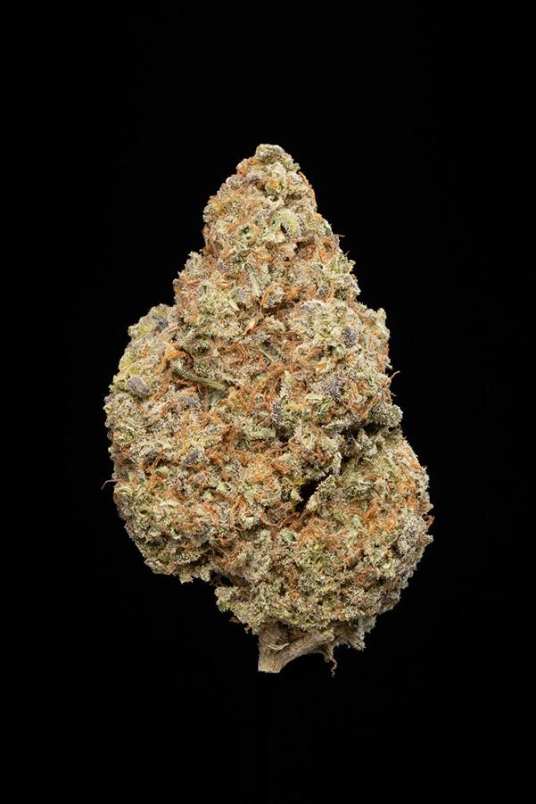 dried orange tingz strain cannabis flower on black background