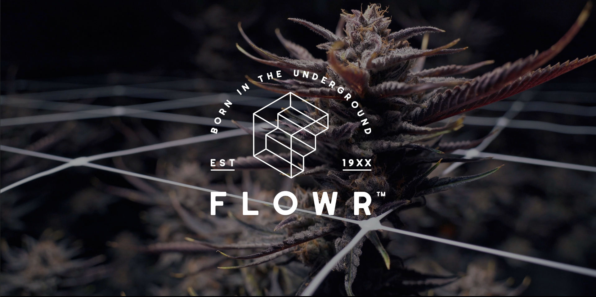 flowr cannabis stacked white logo with dark purple cannabis plants in background