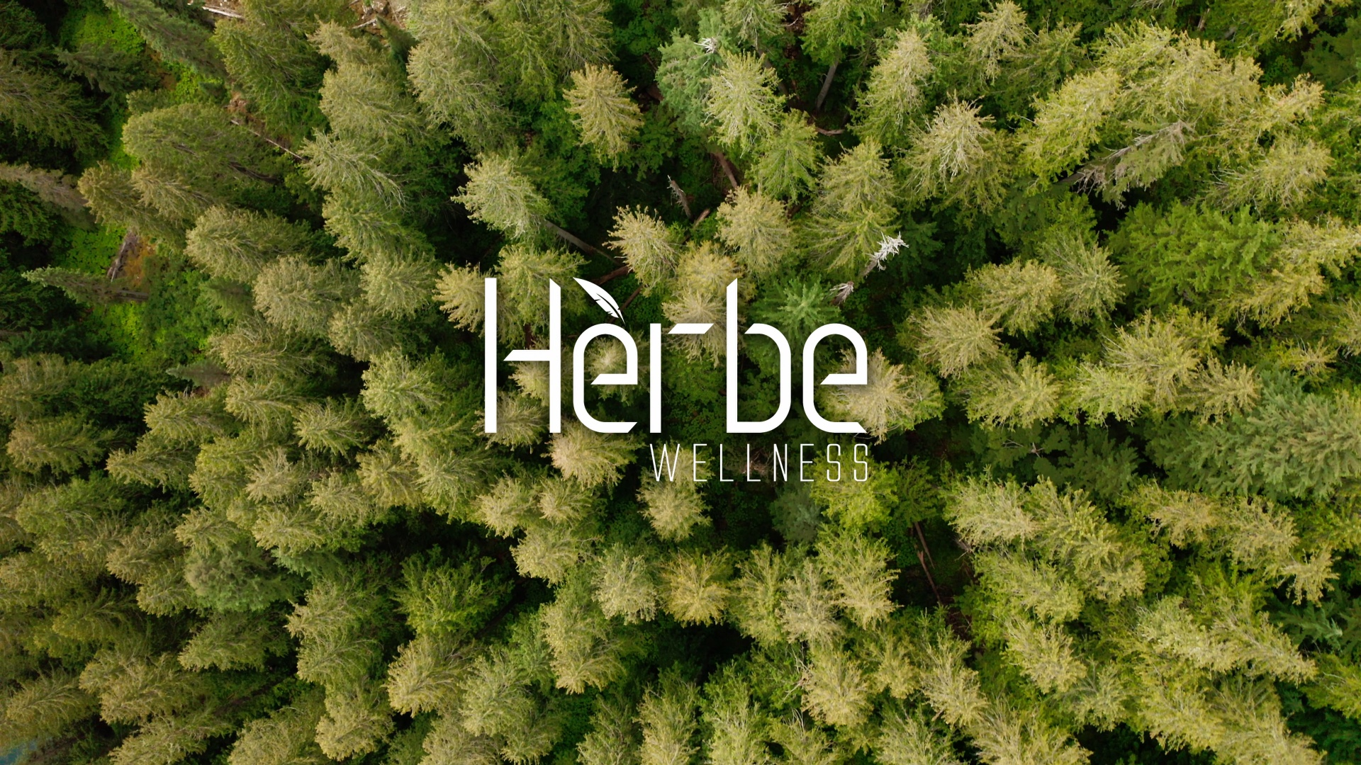 herbe wellness white text logo against aerial shot of forest