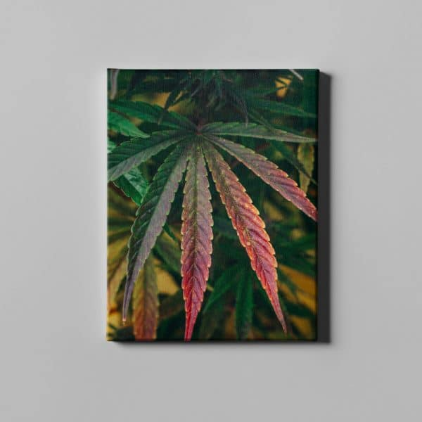 Cannabis fan leaf with fall colors on printed canvas