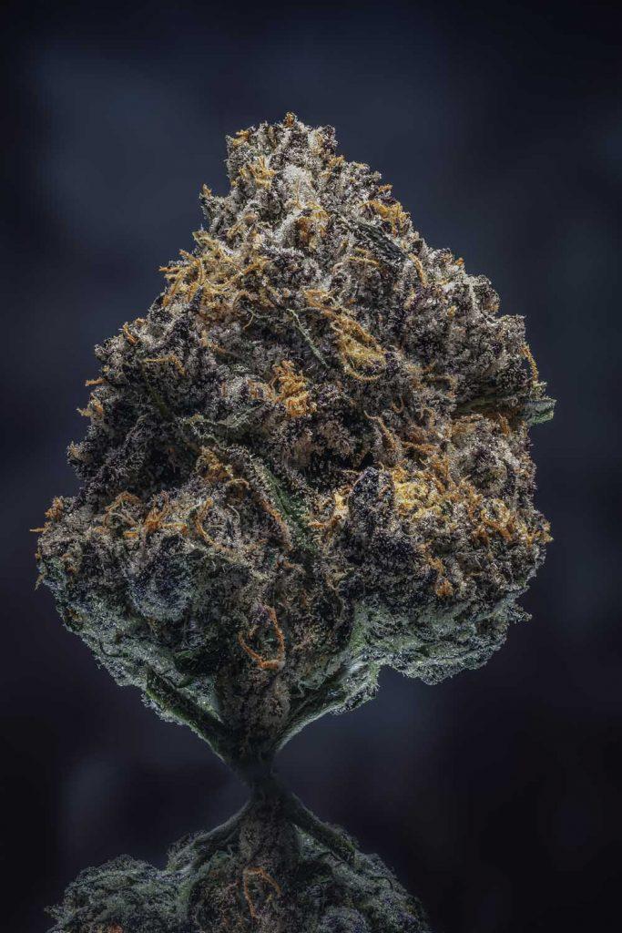 macro close up of dried cannabis nug