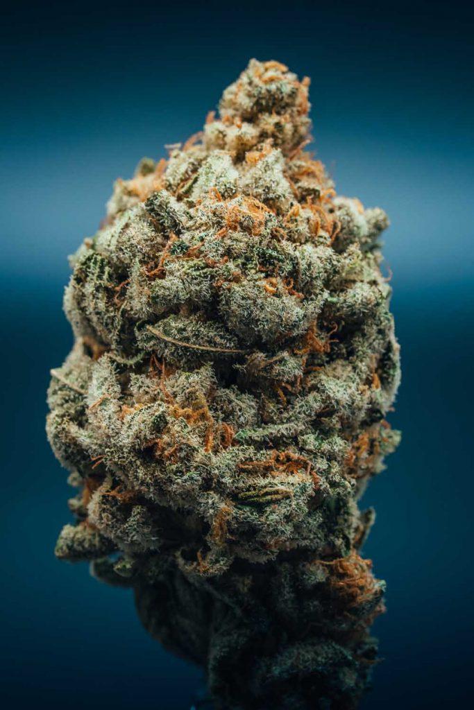 dried trimmed green cannabis flower